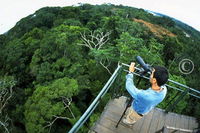 Posada Amazonas canopy tower with amazing forest views & Lodge Picture Galleries | Posada Amazonas | Posada Amazonas canopy ...